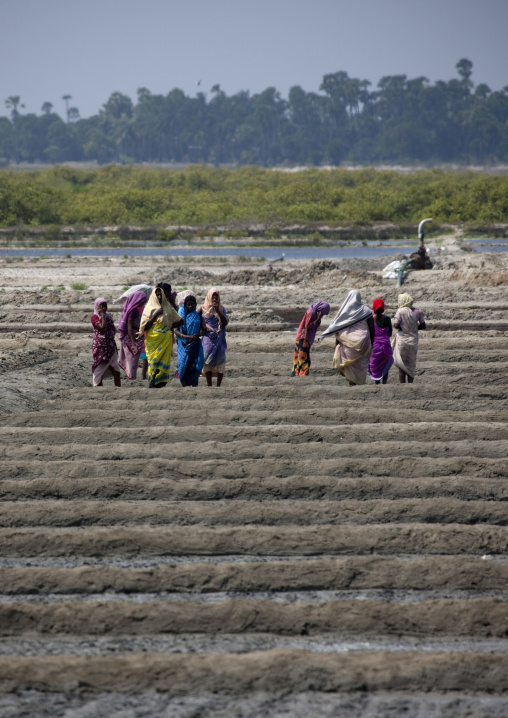Group Of Women Wearing Scarfs In A Field, Mahabalipuram, India