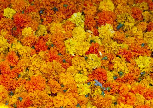 Cut Fowers At Flower Market, Pondicherry, India
