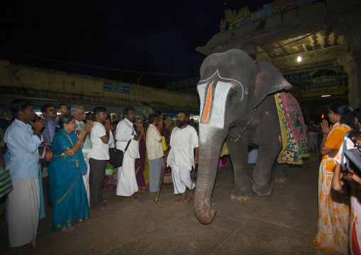 Indian People Praying In Front Of A Decorated Elephant With Vaishnava Tilak On Its Forehead During A Ritual In The Sri Ranganathaswamy Temple, Trichy, India