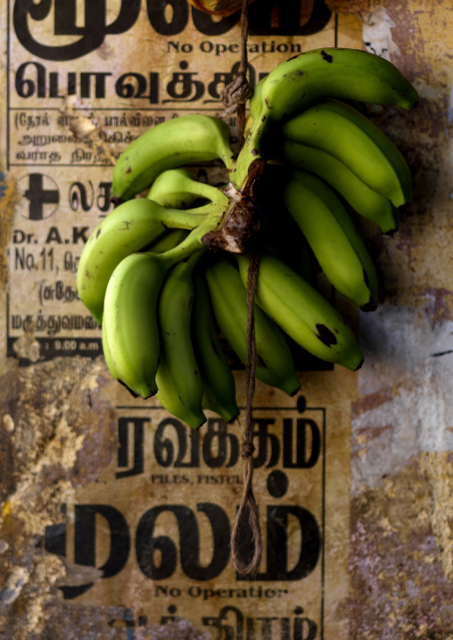 Bunch Of Green Bananas Hung By A String In Market, Pondicherry, India