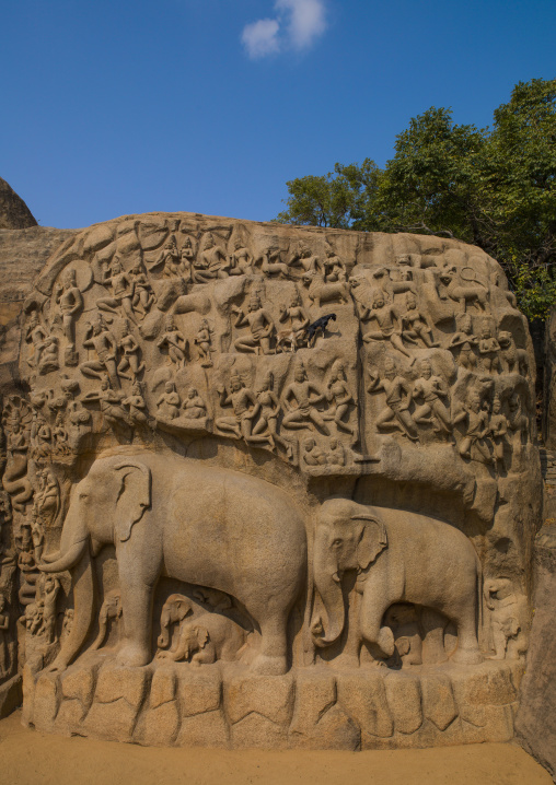 Carving Of An Elephant On Bas-relief Called Arjuna's Penance, Mahabalipuram, India