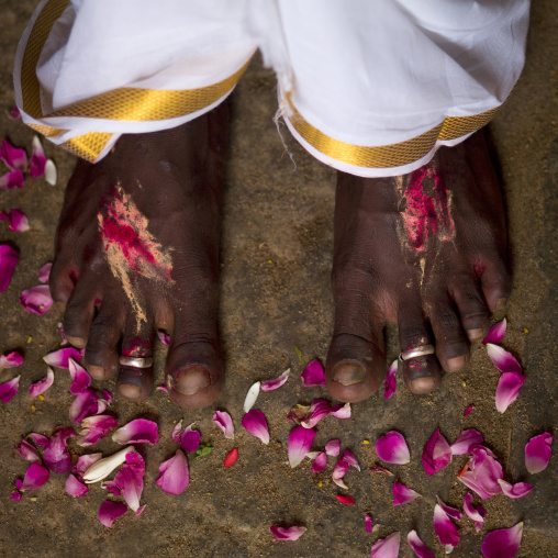 Feet With Rings Of A Just Married Man Surrounded By Rose Petals At His Wedding In Trichy, India