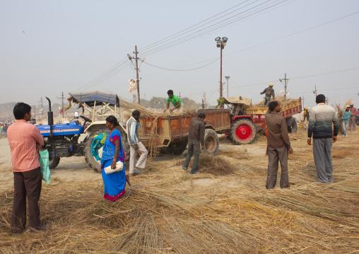 Men Putting Straw On The Riverbank, Maha Kumbh Mela, Allahabad, India