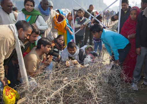 Naga Sadhu Covered With Spines, Maha Kumbh Mela, Allahabad, India
