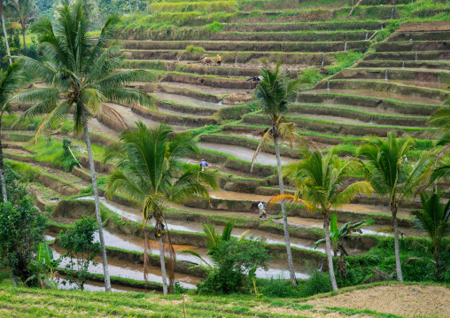 The Terraced Rice Fields