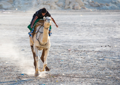 a man racing a camel during a traditional wedding, Qeshm Island, Salakh, Iran
