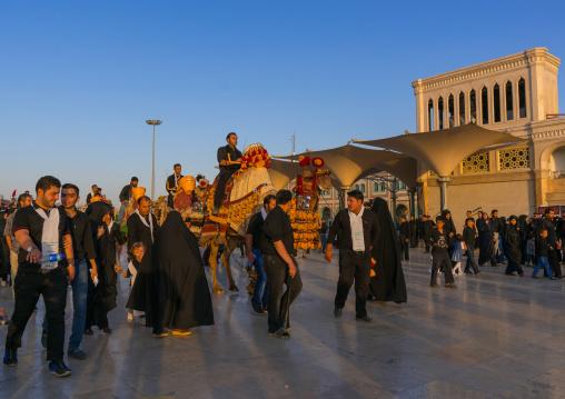 Procession with camels during Muharram celebrations in Fatima al-Masumeh shrine, Central County, Qom, Iran