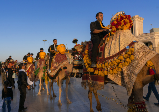 Procession with camels during muharram celebrations in fatima al-masumeh shrine, Central county, Qom, Iran