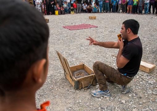 snake charmer pening a box full of snakes, Hormozgan, Minab, Iran