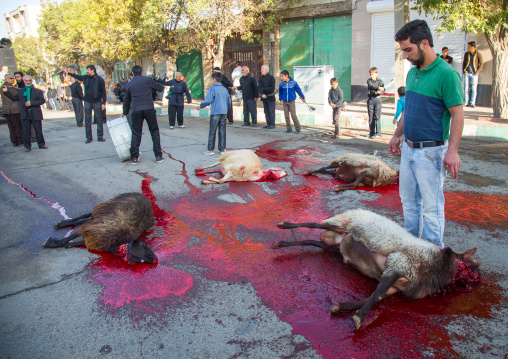 Shiite Muslim Men Standing In The Blood Of A Ritually Slaughtered Sheep On Ashura, The Day Of The Death Of Imam Hussein, Kurdistan Province, Bijar, Iran