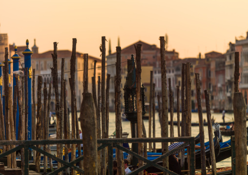 Wooden poles on the grand canal, Veneto Region, Venice, Italy