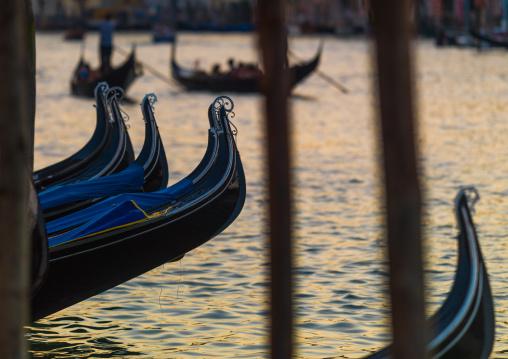 Gondolas parked on the grand canal, Veneto Region, Venice, Italy