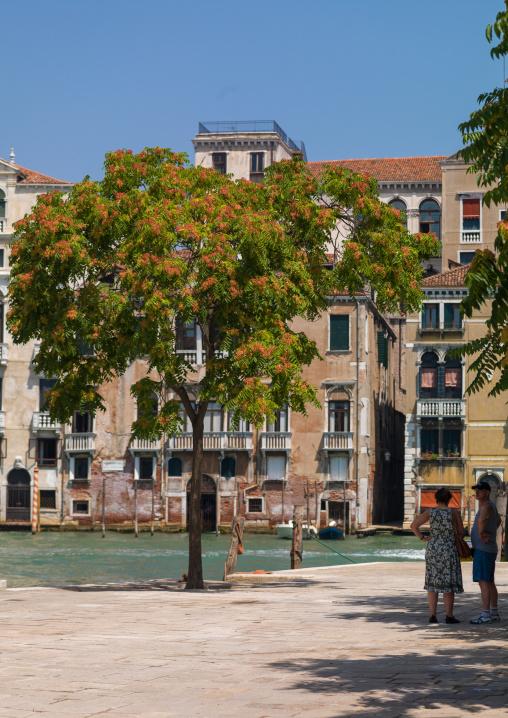 Square with a big tree, Veneto Region, Venice, Italy