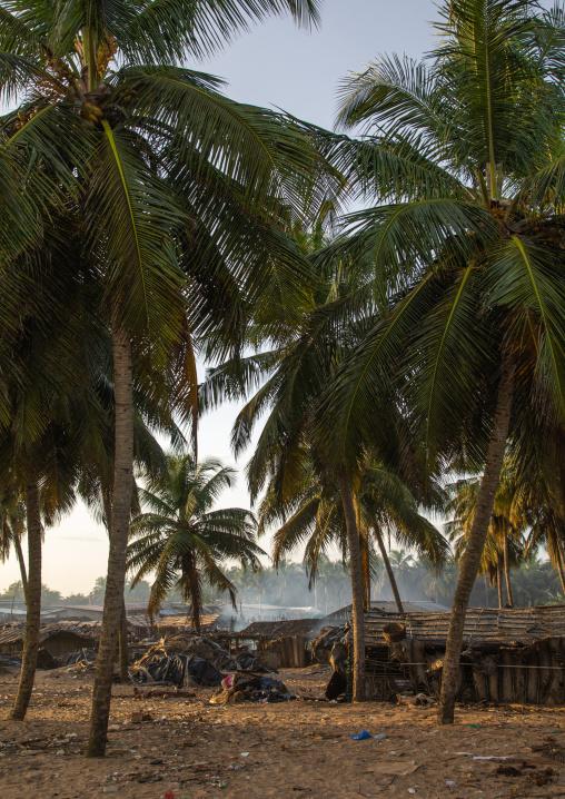 N'zima fishermen village under palm trees, Sud-Comoé, Grand-Bassam, Ivory Coast