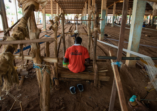 African man from Senufo tribe weaving in a traditional textile factory, Savanes district, Waraniene, Ivory Coast