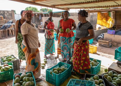 Mangos cooperative, Savanes district, Boundiali, Ivory Coast