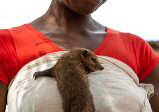 Mongoose pet on the chest of an african woman, Guémon, Bangolo, Ivory Coast