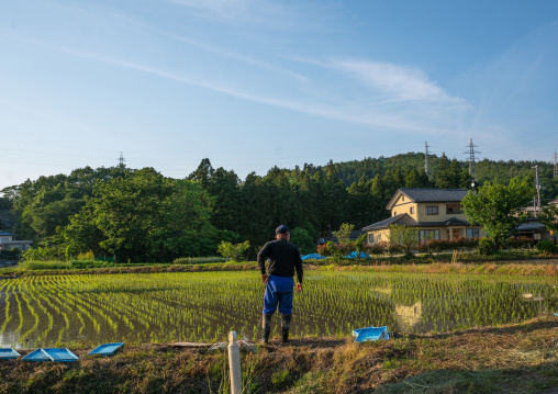 Man in front of his terraced rice field in an area that was affected by the 2011 nuclear disaster, Fukushima prefecture, Iitate, Japan