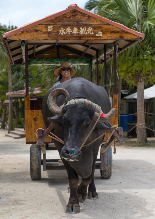 Water buffalo cart tour, Yaeyama Islands, Taketomi island, Japan