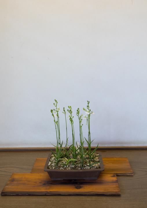 Zen like plant in a pot, Hypgo Prefecture, Himeji, Japan