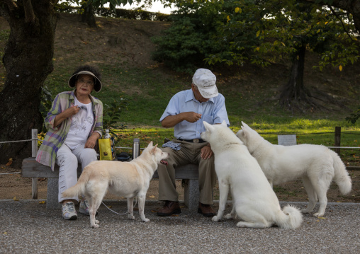 Japanese couple feeding dogs in a park, Hypgo Prefecture, Himeji, Japan
