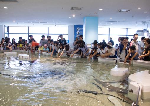 People touching rays and sharks in the touch pool in Kaiyukan aquarium, Kansai region, Osaka, Japan