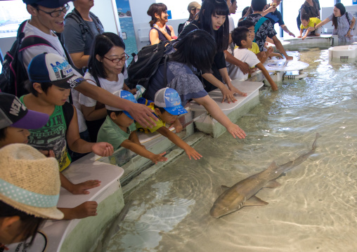 People touching a shark in the touch pool in Kaiyukan aquarium, Kansai region, Osaka, Japan