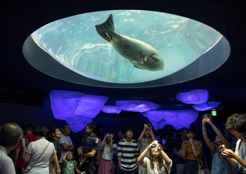 People watching harbor seals in Kaiyukan aquarium, Kansai region, Osaka, Japan