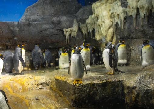 Penguins in Kaiyukan aquarium, Kansai region, Osaka, Japan