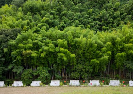 Parking in front of a bamboo forest, Izu peninsula, Izu, Japan