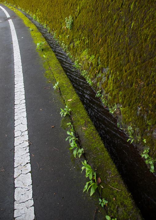 Moss covering a wall, Izu peninsula, Izu, Japan
