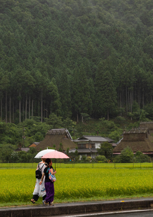 Thatched roofed houses in a traditional village against a forest, Kyoto Prefecture, Miyama, Japan