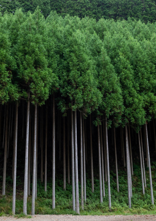 Forest, Kyoto Prefecture, Miyama, Japan