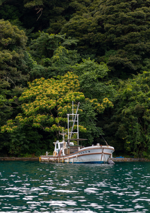 Fishermen boat against bamboo forest, Kyoto prefecture, Ine, Japan