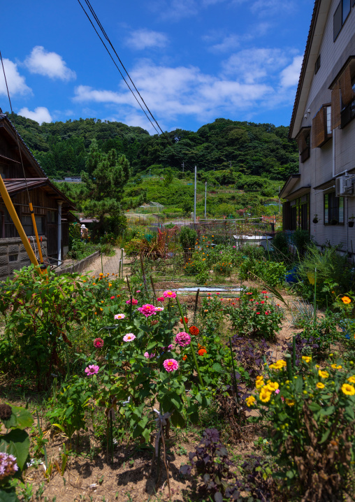 Flowers in a house garden, Kyoto prefecture, Ine, Japan