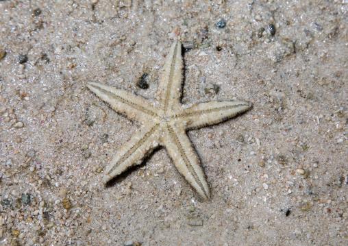 Starfish on beach in Kabira bay, Yaeyama Islands, Ishigaki-jima, Japan