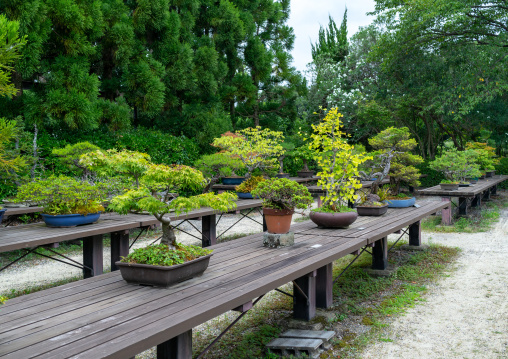 Bonsai trees in the botanic garden, Kansai region, Kyoto, Japan