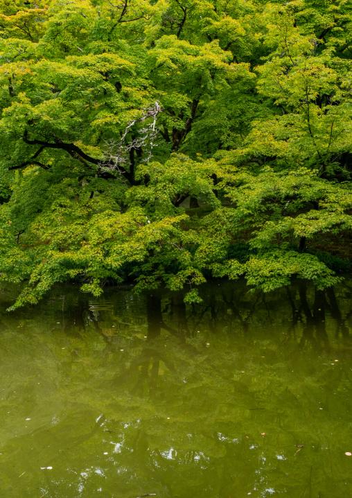 Pond in the botanic garden, Kansai region, Kyoto, Japan