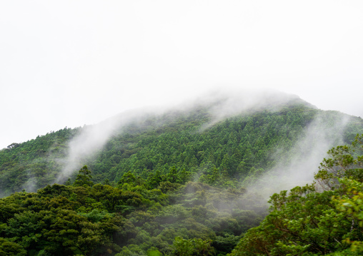 Floating fog on a hill in Yakusugi land, Kagoshima Prefecture, Yakushima, Japan