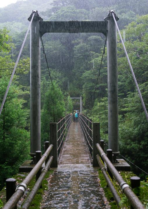 Bridge in Yakusugi land, Kagoshima Prefecture, Yakushima, Japan