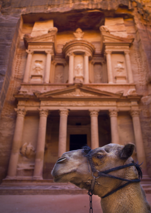 Camel In Front Of Al Khazneh Treasury Ruins, Petra, Jordan