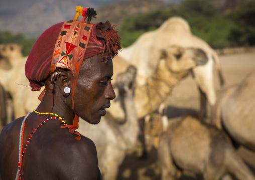 Rendille tribesman with his camels, Marsabit district, Ngurunit, Kenya