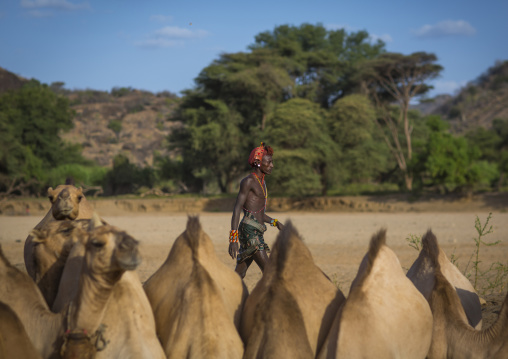 Rendille tribesman with his camels, Marsabit district, Ngurunit, Kenya
