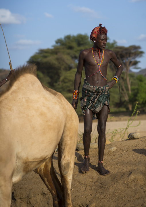 Rendille tribesman with his camel, Marsabit district, Ngurunit, Kenya
