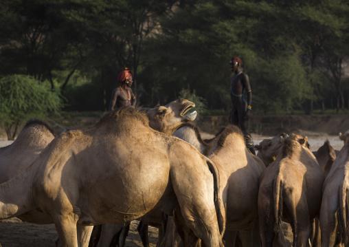 Rendille tribesmen with their camels, Marsabit district, Ngurunit, Kenya