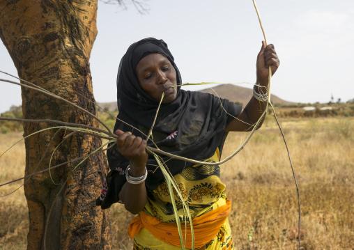 Borana woman cutting wood with her teeth to build a house, Marsabit district, Marsabit, Kenya