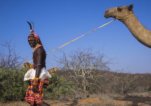 Rendille tribesman with his camel, Samburu county, Samburu national reserve, Kenya