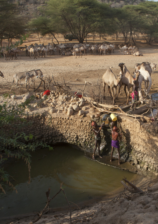 Rendille tribe men taking water in a singing well for their camels, Marsabit district, Ngurunit, Kenya