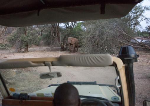 Elephant standing in front of a car, Samburu county, Samburu national reserve, Kenya