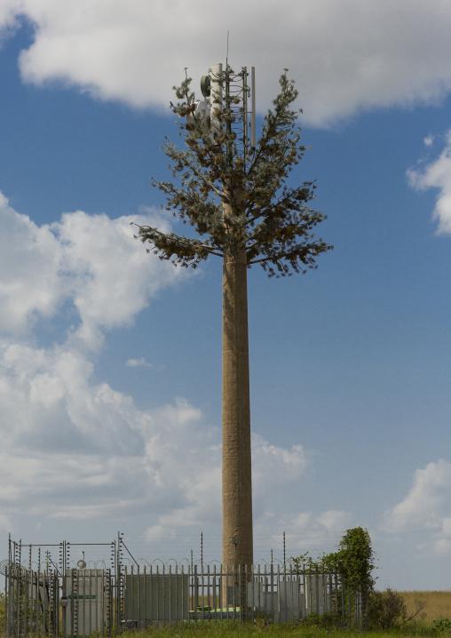 Fake palm used as a phone antenna, Rift valley province, Maasai mara, Kenya